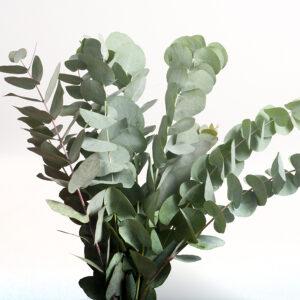 Aroma Eucalipto 30 ml