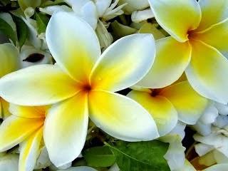 Aroma Gardenia Tahitiana y Coco 30 ml